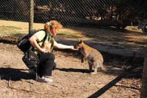 Здесь много валаби (подвид кенгуру).