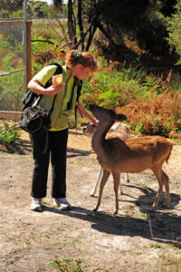 Зоопарк, где можно поближе и более безопасно пообщаться с животными.