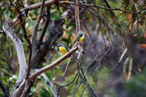 В этом природном заповеднике много разных птиц.