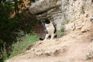 Местный скалолазный кот готов вкушать эти прелести постоянно с каждой новой группой скалолазов на Ворголе.