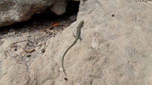 Пока Александр медитирует Олег фото-охотится на ящериц...