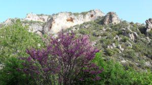 Весна на скалах. Деревья в цвету.